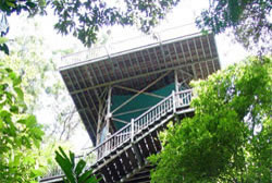 Daintree Eco Centre in the Daintree Rainforest