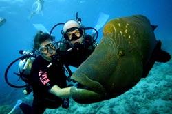 Daintree Coast Great Barrier Reef Queensland