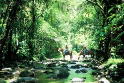 Daintree Rainforest Horse Riding Tropical Far North Queensland