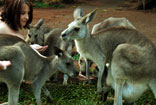 Rainforestation Nature Experience - Cairns Australia